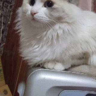 1年6ヶ月と6ヶ月の2匹の子猫の里親募集です。