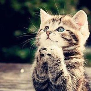 SOS 助けて下さい 上尾・里親様 または 猫ボランティアさん(女...