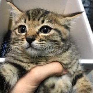 かわいい子猫、里親募集します。