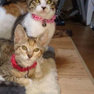 元気いっぱいの3ヶ月の子猫ゴマ♂とあずき♀