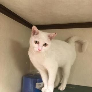 代理投稿・大阪東心斎橋の野良猫