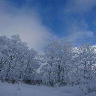 スノーボード powdersnow
