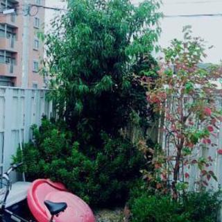 木(カシのき?)
