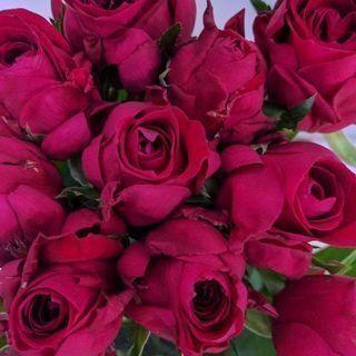バラ 2本 赤 生花