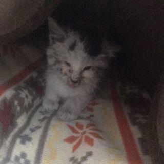 生後約1ヶ月、保護猫