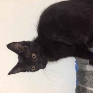 黒猫メス3か月半撫でられるの大好きです