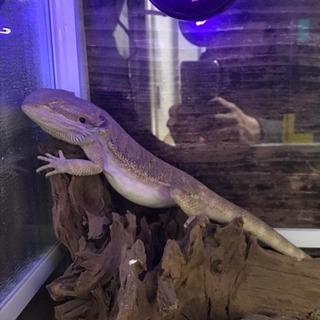 爬虫類好きの友達募集してます!