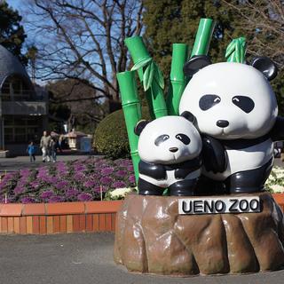 1月12日(1/12)  祝!シャンシャン!上野動物園に人気のパ...