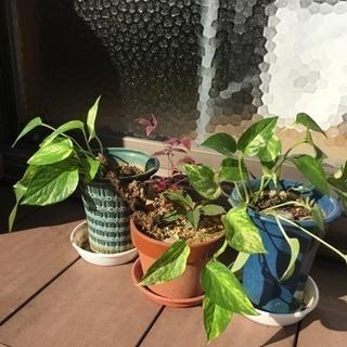 鉢植え 色々  無料🌟
