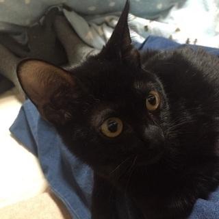 黒猫の美猫さん、ひとなつこいココちゃん5ヶ月★