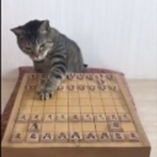 大人気!将棋の家庭教師 - 草加市