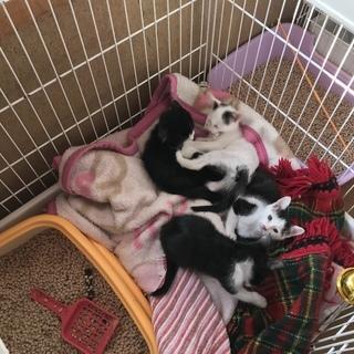 4匹子猫貰ってください!再度up