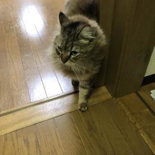 猫の里親募集します