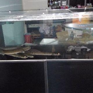 カンテツ 1500×600×450 アクリル水槽セット 水槽台付...