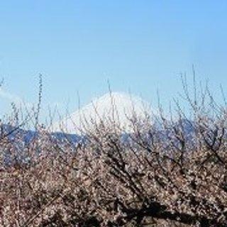 2月23日(金)曽我ハイキングと曽我梅林