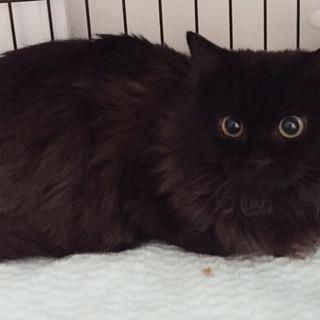多頭飼育崩壊から保護した黒猫♂♀