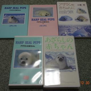 ☆アザラシの赤ちゃん 写真集3冊 VHS2本 計5点セット 中古...