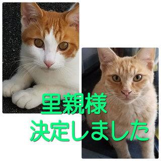 仲良し子猫兄弟(生後7カ月)の里親様・募集です!!
