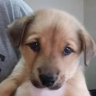 2か月の子犬の家族になってください!1-♂