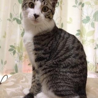 雑種のオス猫です