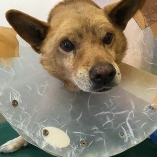 迷い犬が事故にあって病院に運ばれました。
