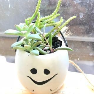 植物の育成講座 ➕ 雑談会