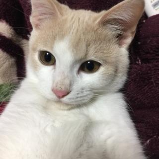 イケメン子猫🐈もらって下さい!