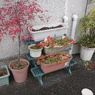 鉢植えリサイクルのチカイ