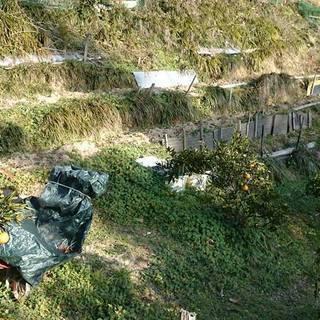 貸農園限定1区画 − 愛媛県