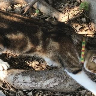 迷い猫!首輪つけています!🐈那覇市小禄