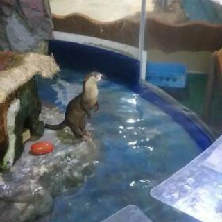 池田動物園 年間パスポート