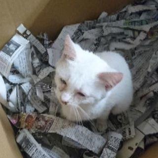 【至急】子猫(捨て猫)の里親を募集しています