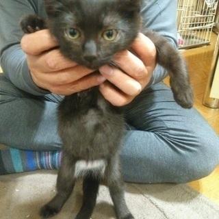 まん丸な目の黒仔猫三兄弟の一匹