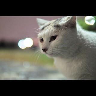 公園のアイドル猫♪多摩川ヒメちゃん♪