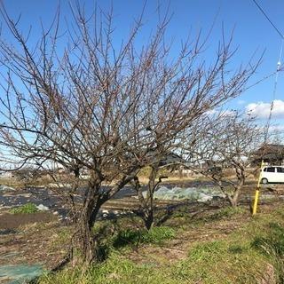 滋賀県東近江市の畑、有休地(165平方m)貸します❗️