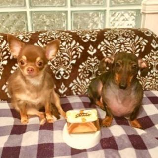 2匹の愛犬をよろしくお願いします