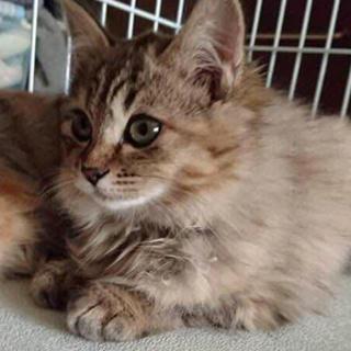 子猫の里親募集 釧路 [2] - 釧路市