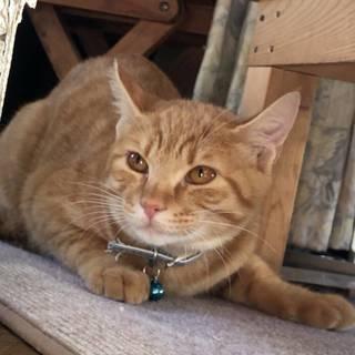 TNRで捕まっちゃった子猫チョコちゃん