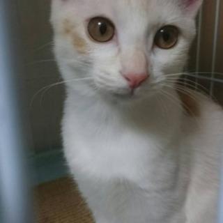 メス猫1歳(避妊手術済み)