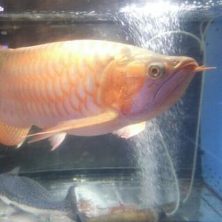 熱帯魚のお引越しはお任せ下さい!