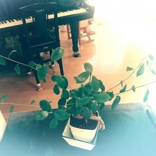 ピアノ教室 読谷村