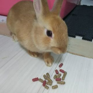 ウサギ里親募集