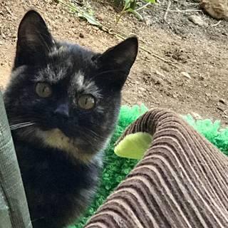 チョビひげ・サビ猫の里親様を探しています!