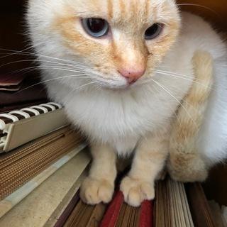 去勢済み。保護猫ちゃんの新しい家族を募集