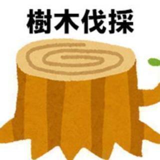 【水戸市】空き家の庭木伐採&草刈り除草!独自料金システム
