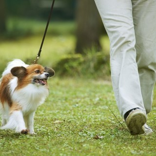 老犬介護・ペットシッター・お散歩代行 ペットケアサービス クー