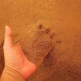 肥料としてどうぞ!! 酵素風呂で使用した発酵済米糠です。