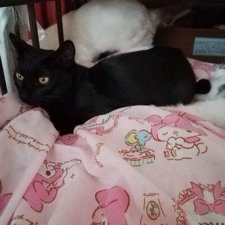 ☆魔女宅ジジ似?美人黒猫♀