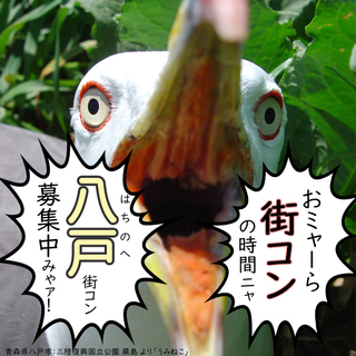 2018/3/17八戸コン☆ハピこい☆春がくる! うみねこが飛来す...