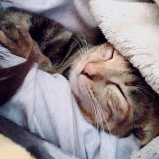 すごく可愛い猫です助けてください